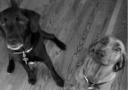 black and white photo of two dogs looking up