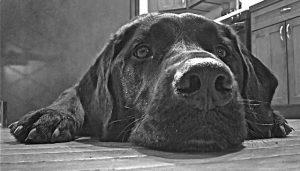 Buck the dog
